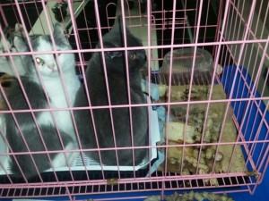 Породистых котят бросили после выставки