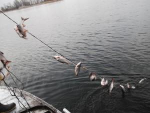 Не отходя от рабочего места. Инспектор рыбоохраны арестован за браконьерство
