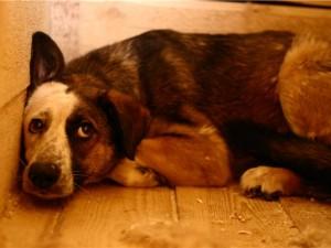 Десятки челябинцев ищут сбежавших от фейерверков собак