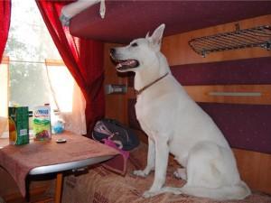 РЖД разрешило оформлять билеты на домашних животных через Интернет