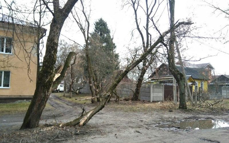 Брянские чиновники не хотят замечать повисшее на проводах дерево