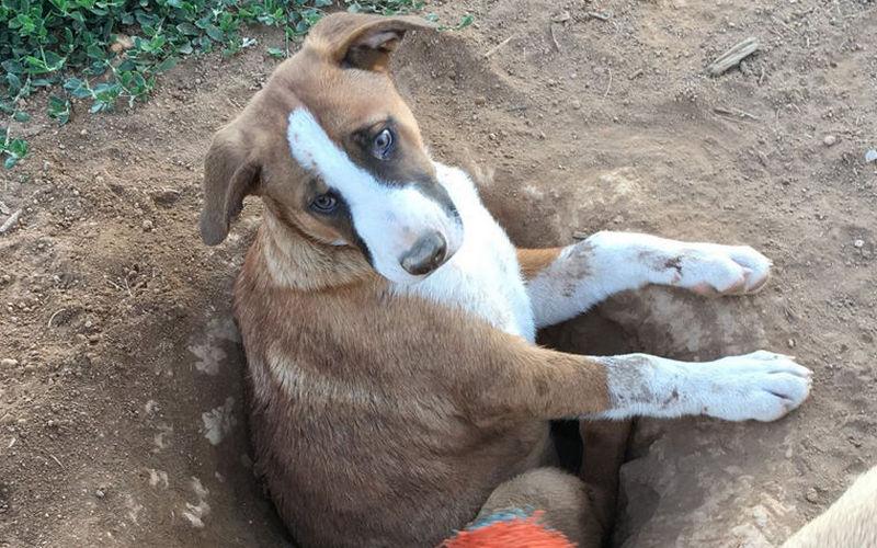 Зачто пес Купер получил титул самой глупой собаки