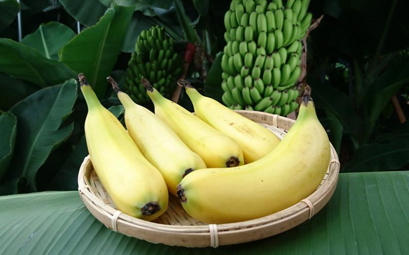 Скоро будем есть бананы скожурой