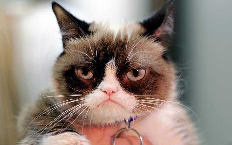 Кот-мем отсудил $710 тысяч заиспользование его образа