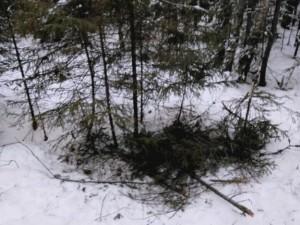 Собаки спасли пропавших в уральском лесу детей