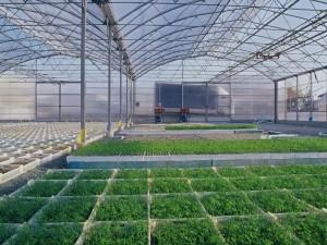 424,15 млн рублей получил Усть-Катав на развитие аграрного сектора