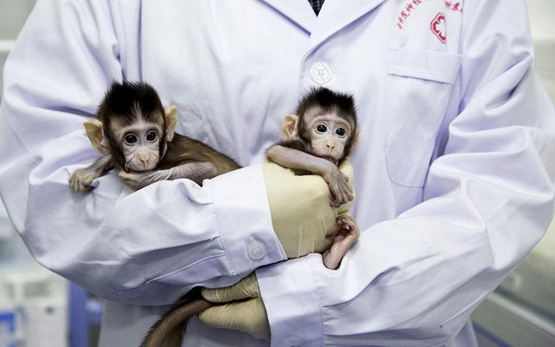 Китайцы клонировали обезьянок