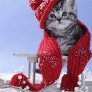 Снег отступает— 21января наБрянщине без осадков