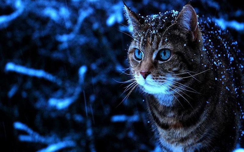 Брянцев ждет морозная ночь