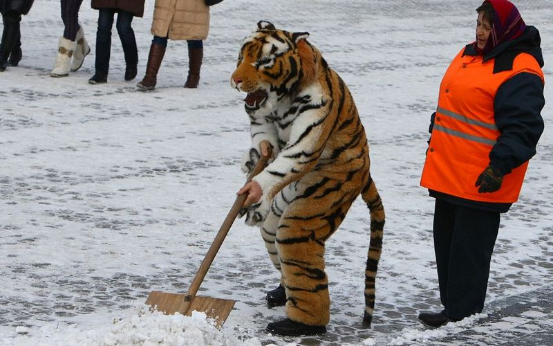 Нет денег — нет машин: Брянск столкнулся с нехваткой снегоуборочной техники