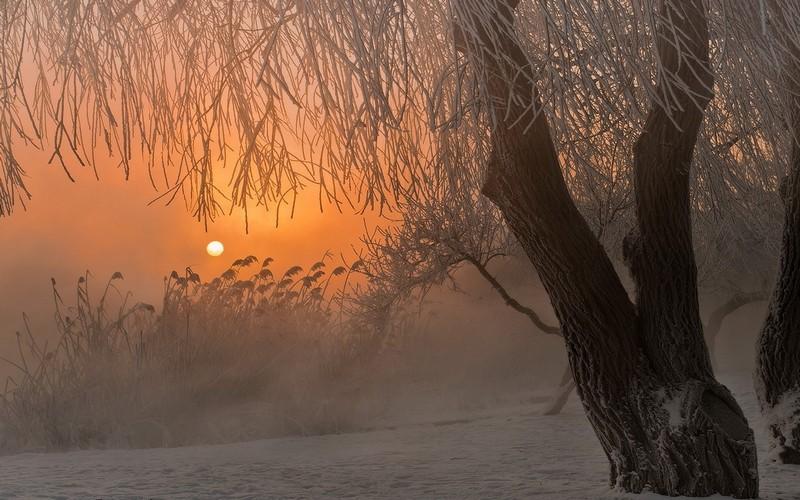 Морозы отступают — брянцам обещают туман и изморозь