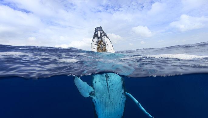 Видео: кит спас женщину отакулы