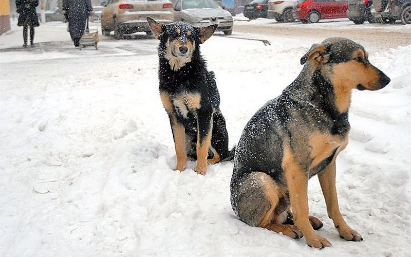 Возле площади Партизан в Брянске отравили собак