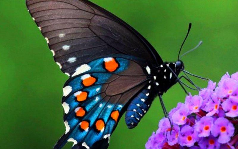 Брянцев зовут полюбоваться на диковинных бабочек
