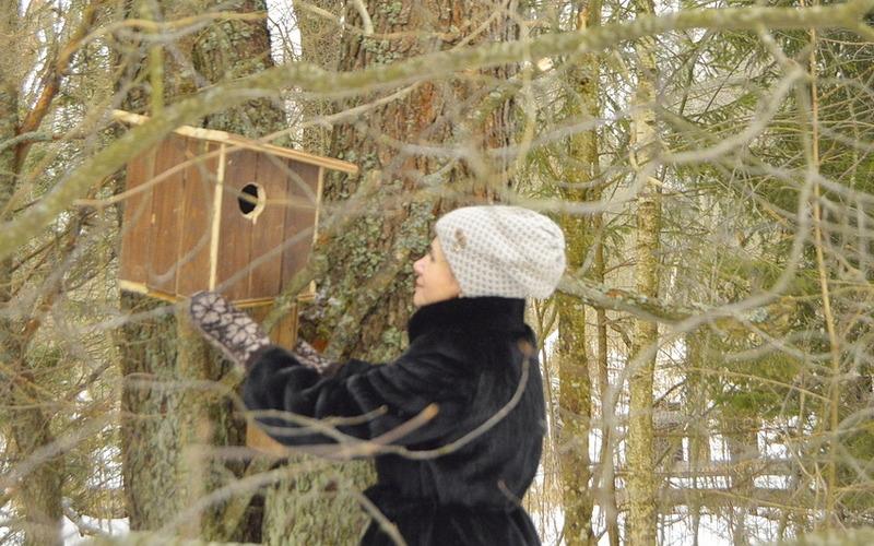 Белки «Брянского леса» получат новые квартиры