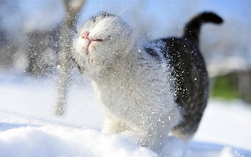 Во вторник брянцам пообещали снег и легкий морозец