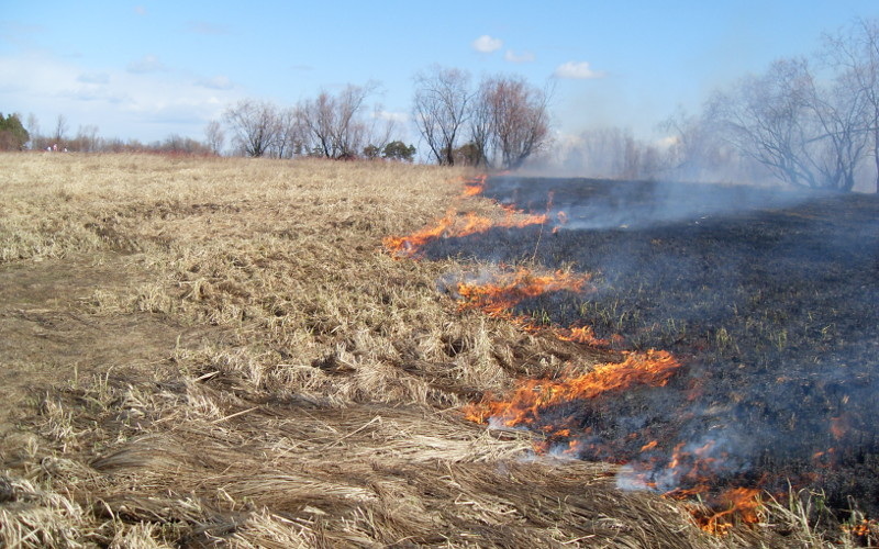 Брянцам рассказали об изменениях в Правилах противопожарного режима