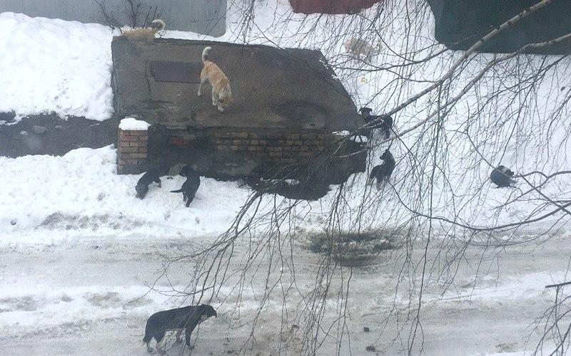 Раскопками коммунальщиков в Брянске заинтересовались собаки и цыгане