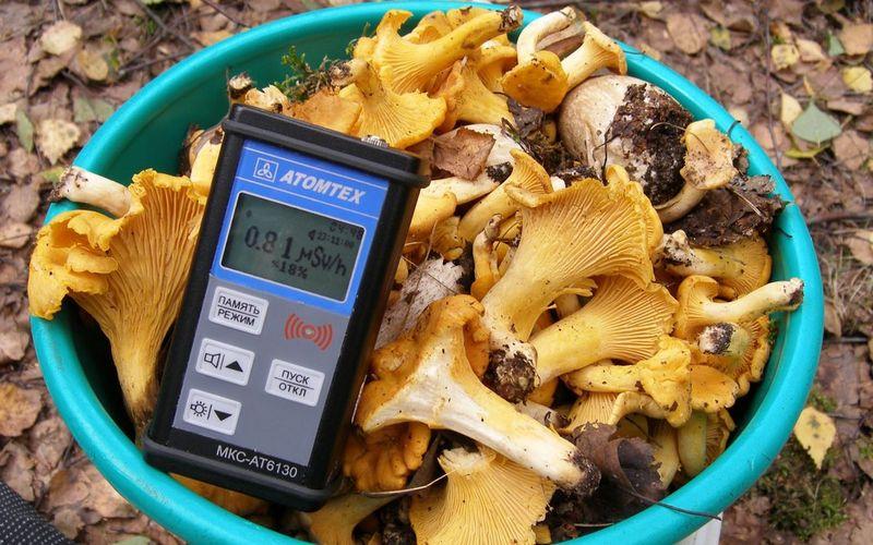 Клинцовские грибы содержат цезия-137 вдесятки раз больше нормы