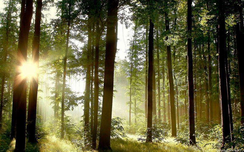 Более 12 миллионов саженцев деревьев ценных пород вырастили в Брянской области