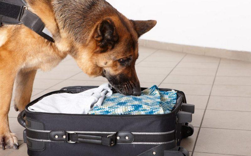 ВТроебортном брянская пограничная собака раскусила украинца смарихуаной