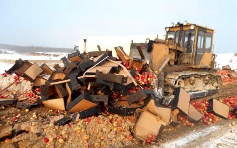 ВРатово зарыли вземлю более 23 тонн яблок икартофеля