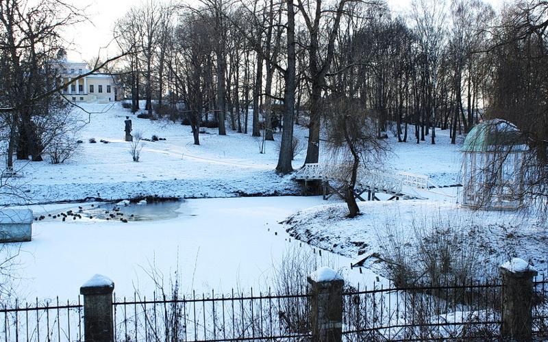 В Брянске и Овстуге на зимовку отважились 150 «серых шеек»