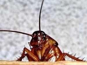 Жители бьют тревогу: в Челябинске тысячи тараканов лезут из колодцев