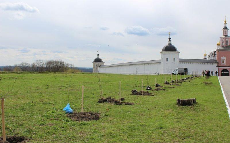 Возле Свенского монастыря появилась рябиновая аллея