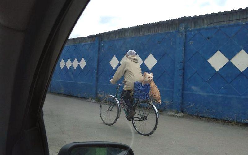 Собака на велосипеде вызвала умиление у брянцев