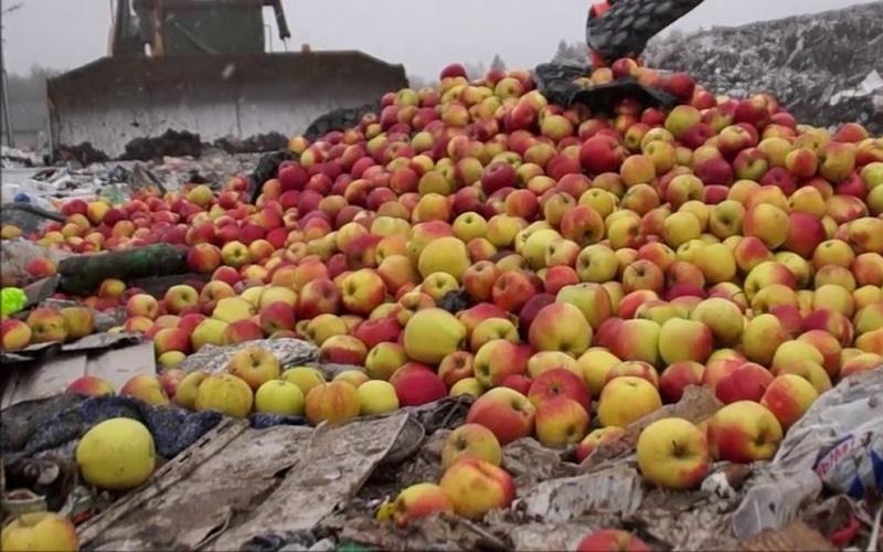 На свалку под Новозыбковом отвезли 3,7 тонны яблок