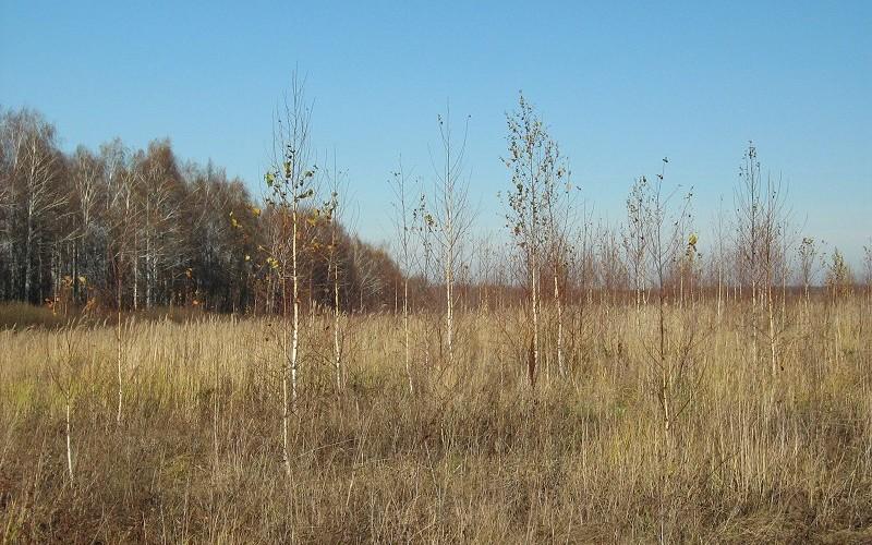 В Почепском районе бросили на произвол судьбы 160 гектаров земель