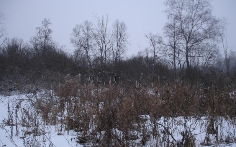 В Брянской области нашли 13 гектаров погибающих земель