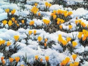 На Первомай в Челябинской области пойдет снег с дождем, ночью заморозки