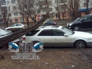 Дерево рухнуло на машину