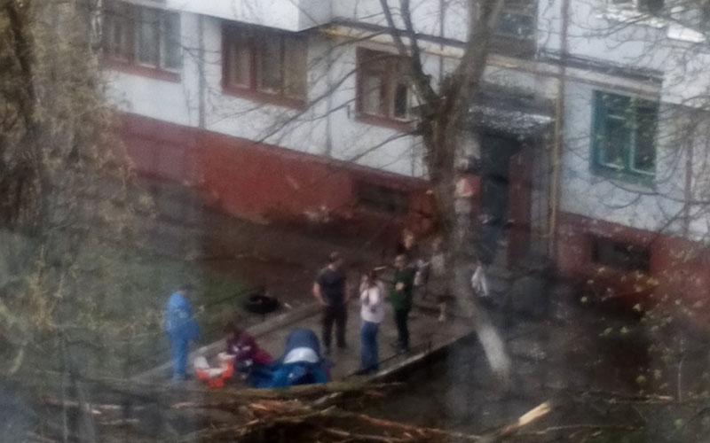 ВБрянске рухнувшее дерево придавило женщину