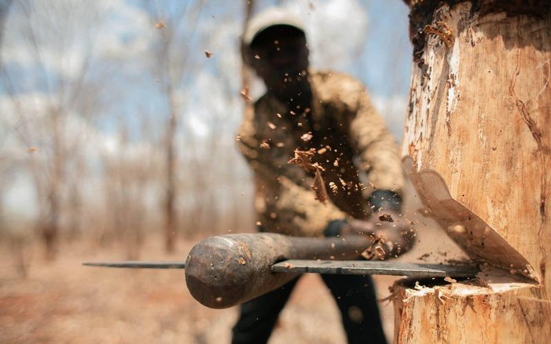 Черные лесорубы из Новозыбкова отделались условным сроком