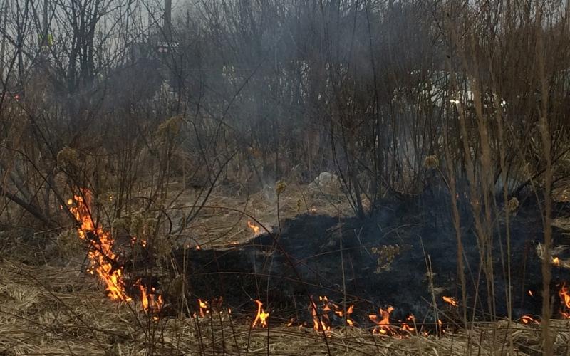 Горящая трава в Брянске стала головной болью общественников