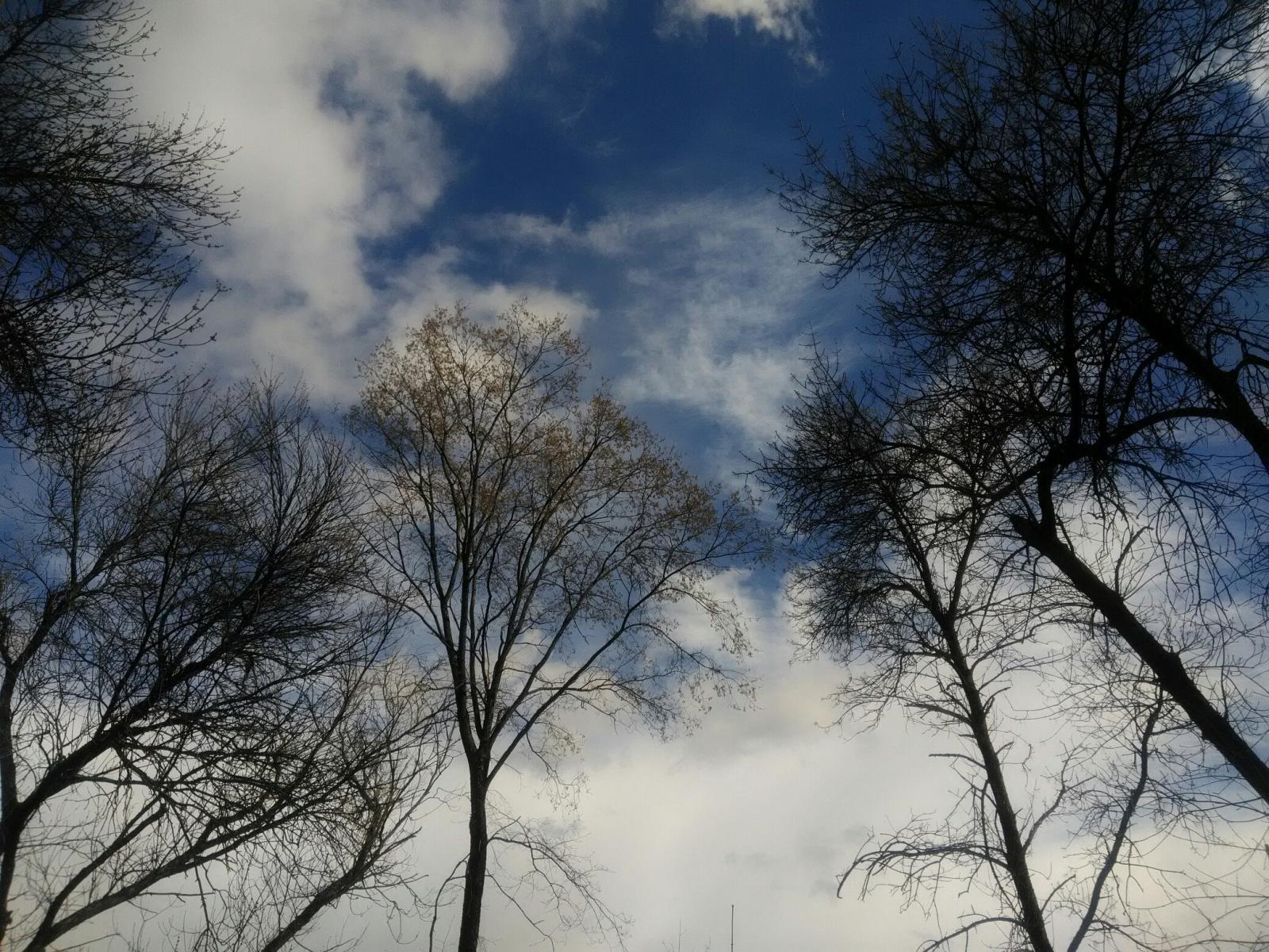 Разошлась погода в Брянске: чего ждать от природы 23 апреля