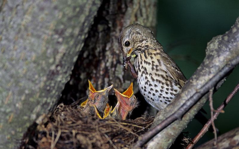 Любителей птиц позвали на бесплатные экскурсии в «Брянский лес»