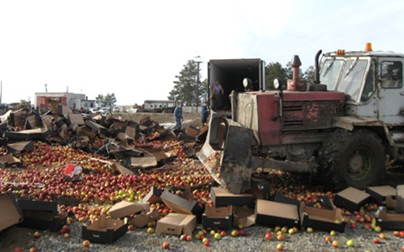 В Брянской области под трактор пошли пекинская капуста, томаты, яблоки и клубника