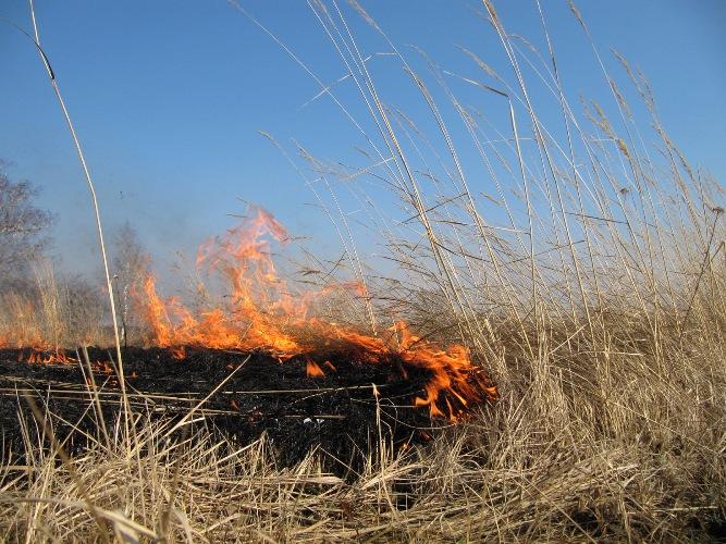 В Дятьковском районе из-за пала травы сгорели дома и киоск