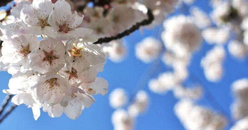 Синоптики рассказали, какая погода ждет брянцев на майских праздниках