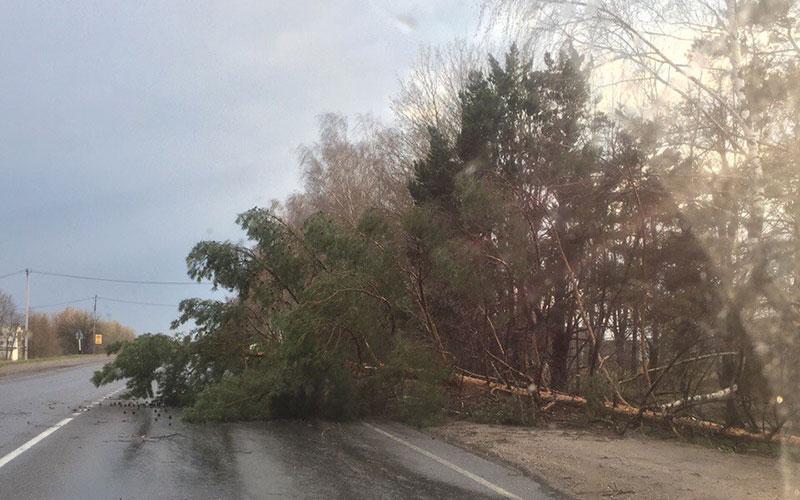 ВБрянской области отураганного ветра пострадали два человека