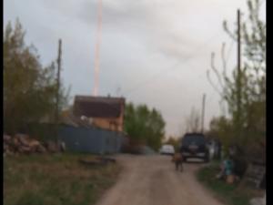 Дикий кабан гонял собак по Челябинску