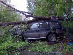 Дерево рухнуло на машину у автодрома ГИБДД