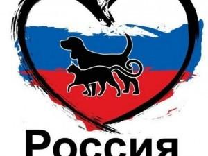 Живодеры заживо сожгли кота в Челябинске