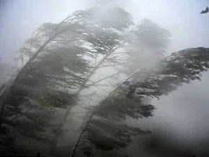 Последствия урагана до сих пор ощущаются по всей Челябинской области