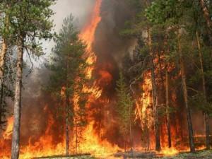 Две деревни спасли от лесных пожаров