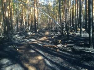 Пожар в Ильменском заповеднике удалось остановить